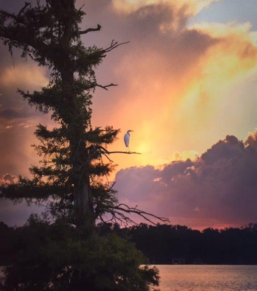 Spencer Warlick Egret Photograph